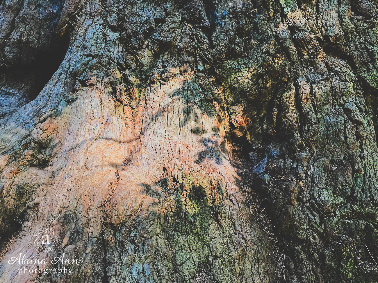 Redwood Shadows | Friday Favorite | Alaina Ann Photography