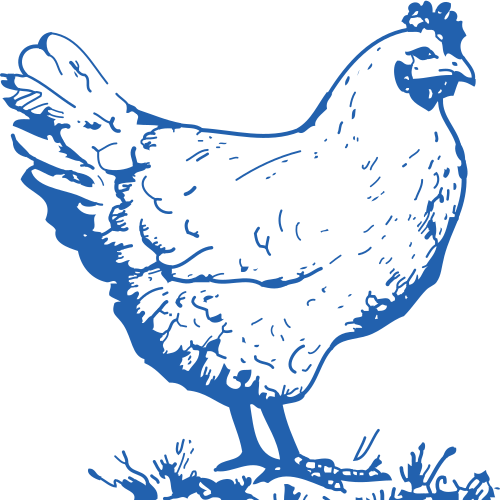 chicken_standing_square_blue.png