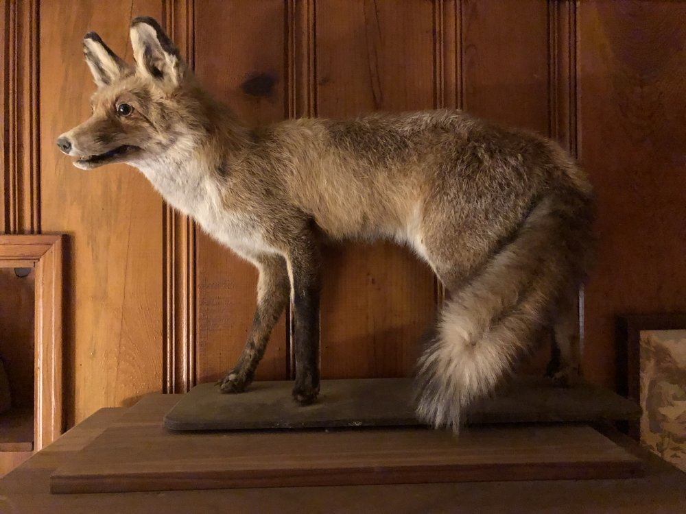 My trusty fox.