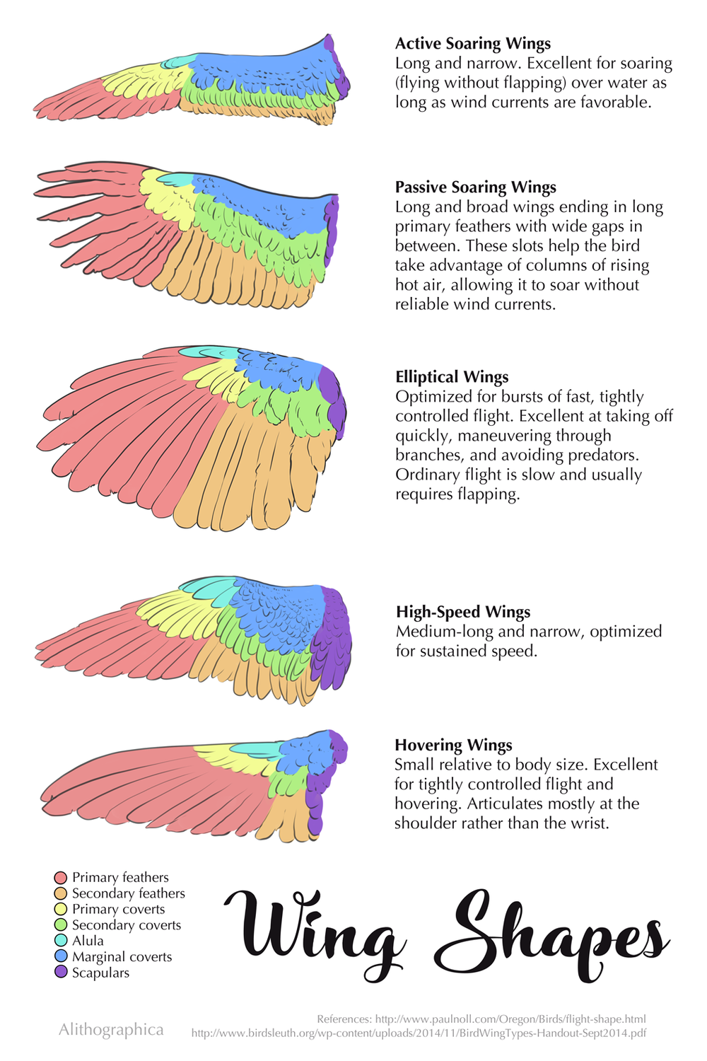 Wing Shapes infographic