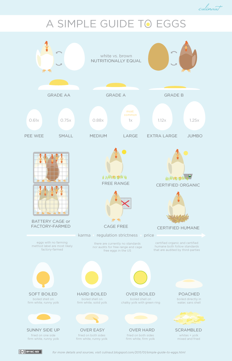 A Simple (Visual) Guide to Eggs