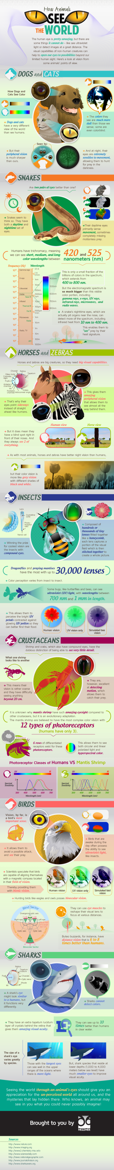 How Animals See The World infographics
