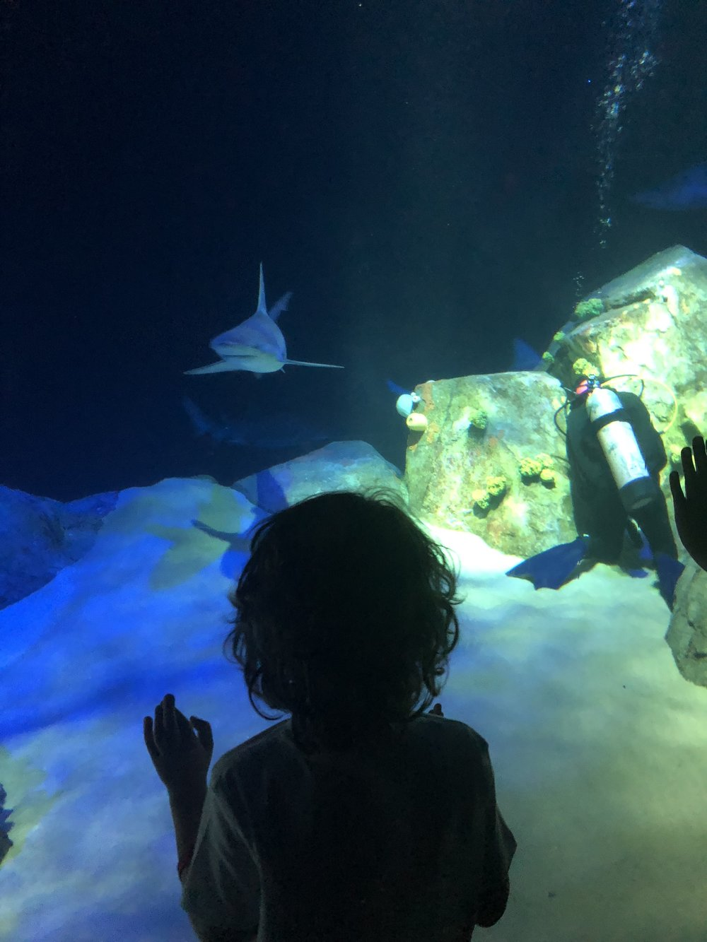 New shark exhibit at the NY Aquarium
