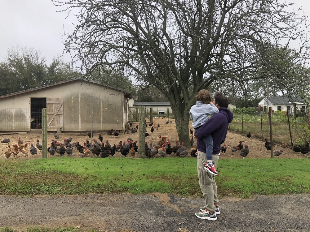Visiting the chicken farm in Long Island