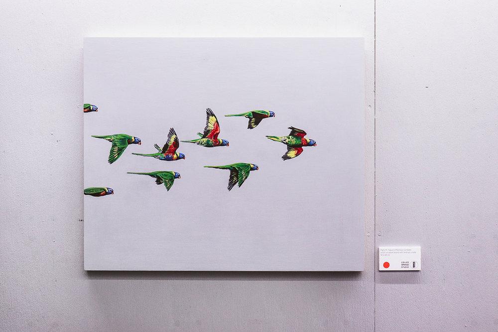 Flight IX: Squad of Rainbow Lorikeets