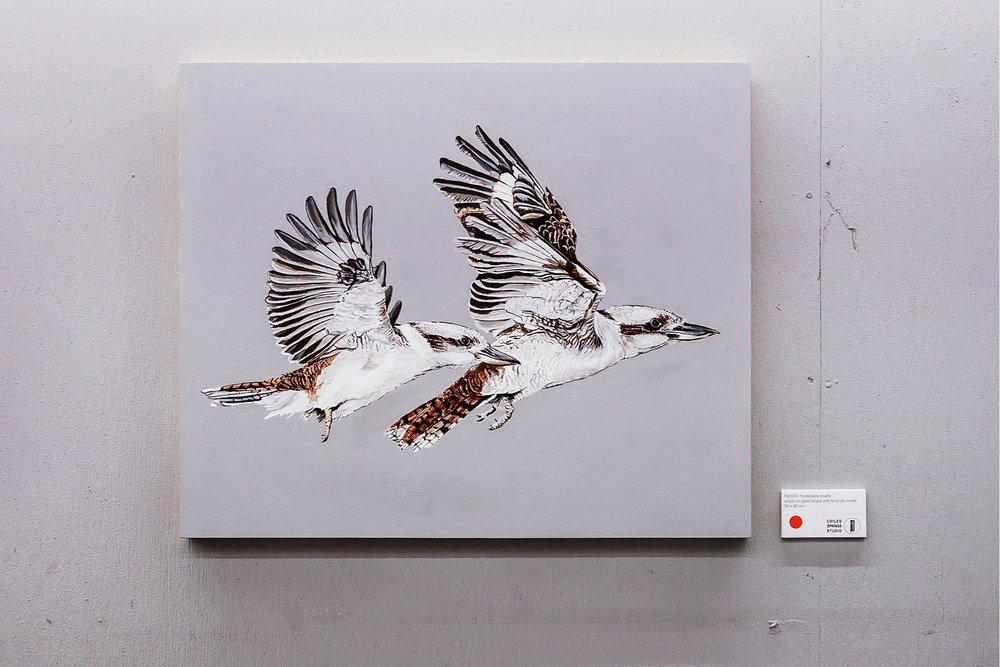Flight VII: Kookaburra Couple