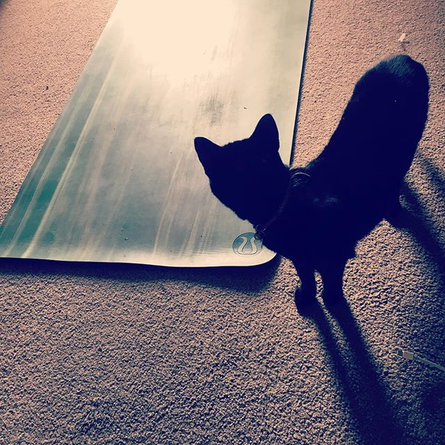 Your morning practice ain't gonna do itself Ophelia.  #mytribe @daneoddy #straycat #ophelia #yoga #spiritualaf #girlnextdoor