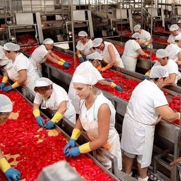 How the tomatoes come into the can - Social Cooperative in South Italy