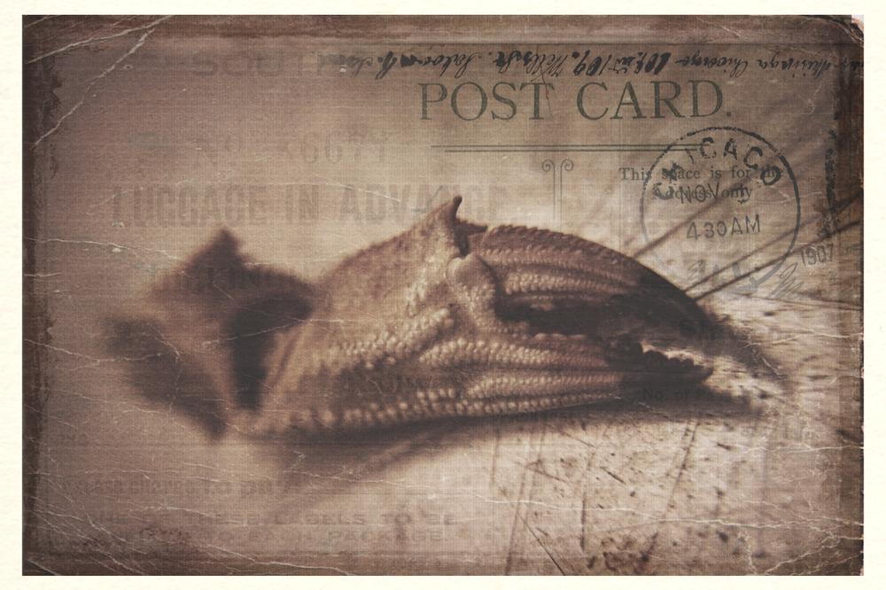 Postcard 01: Holidays