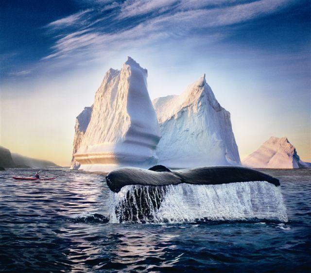 Whale iceberg kayaker.jpg