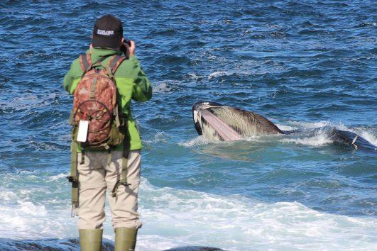 Whales-feed-1140x760-531x354.jpg