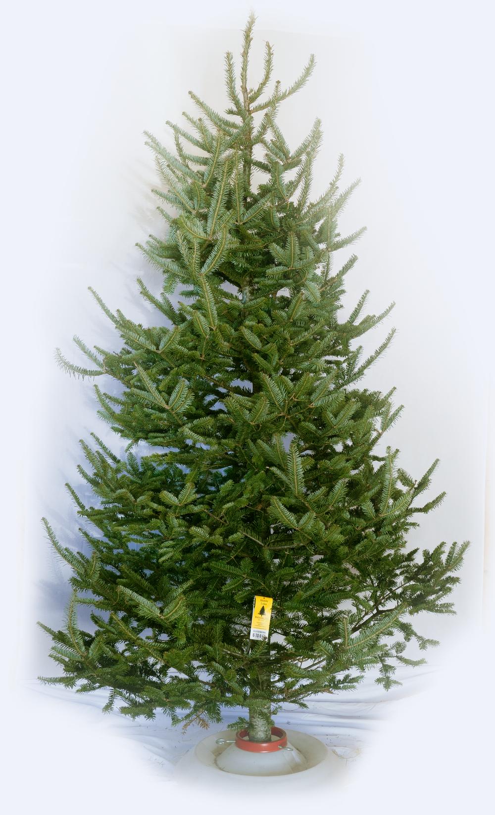 GL-Tree-Grades-Natural.png