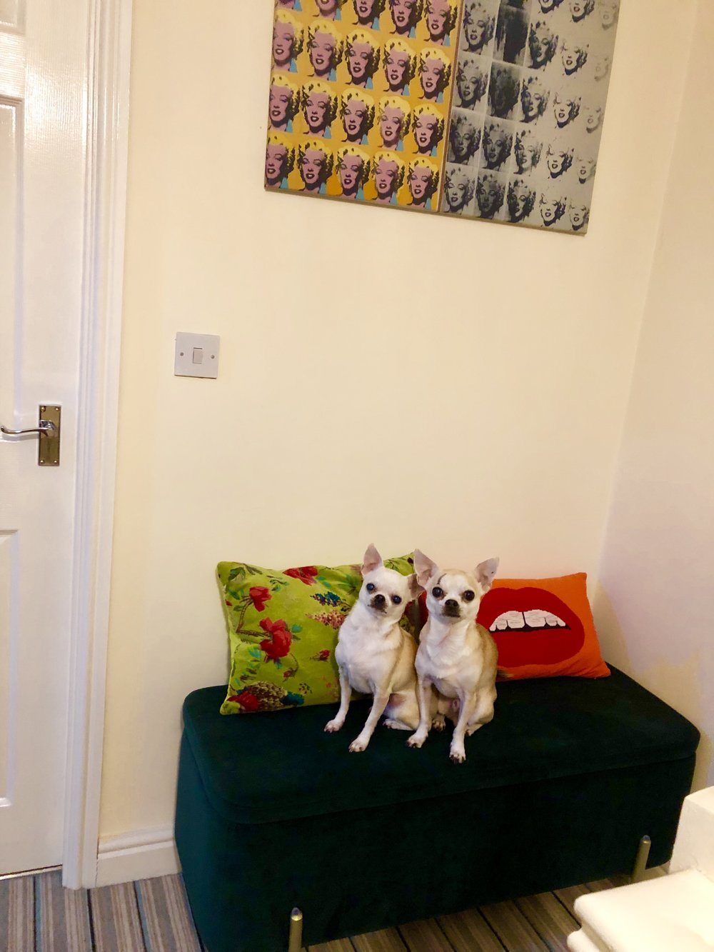 Ottoman - I'll give you 3 guesses……. made.com Cushions - Made.com Chihuahuas - free to good home (only bite now and again)
