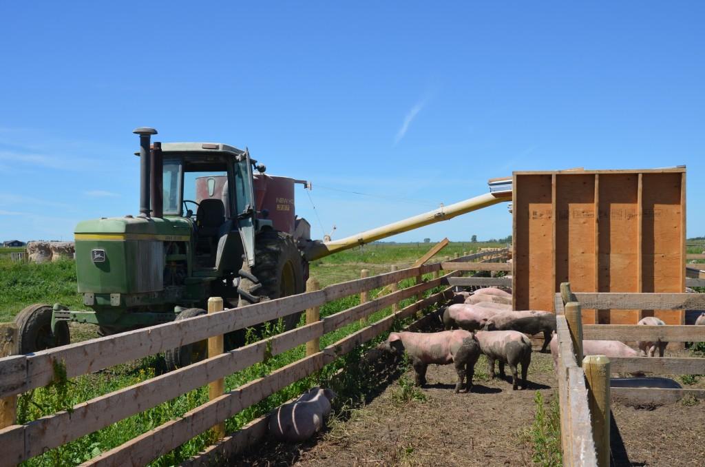 5 Reasons We Love Being an Alberta Farm Family