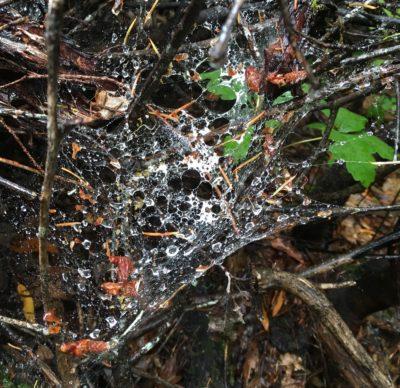raindrops in spiderweb