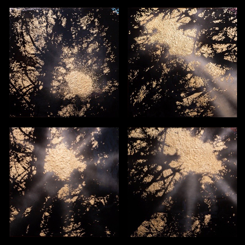 """Sequoia Sunrise  24"""" x 24"""" (x4)"""