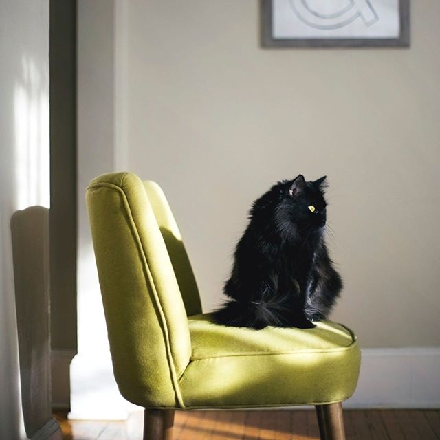 Would you consider putting fake fingernails on your cat to protect your furniture?⠀ ⠀ Cat Scratch Fever: 5 Tips to Protect that New Sofa ⠀ ⠀ https://www.borderstan.com/2011/09/01/cat-scratch-fever-5-tips-to-protect-that-new-sofa-not-declawing/