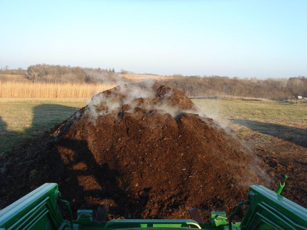 Horse manure steaming.jpg