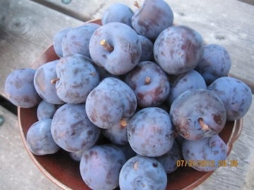 Blue Plums in Bowl.jpg