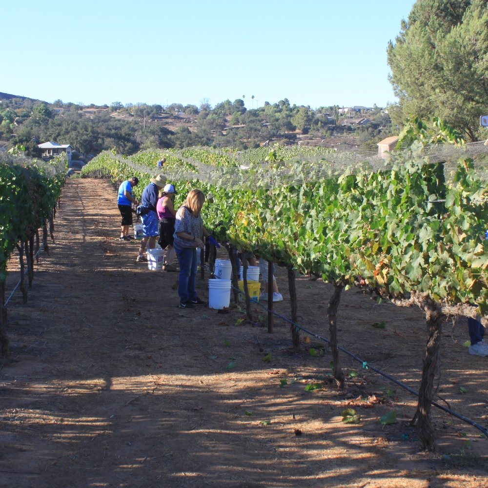 Stories From Wine Country -