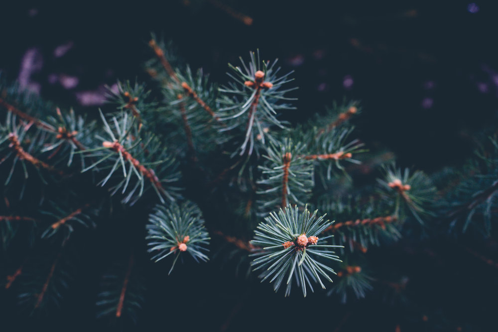 Winter is here! - Christmas Trees and winter holiday items are for sale