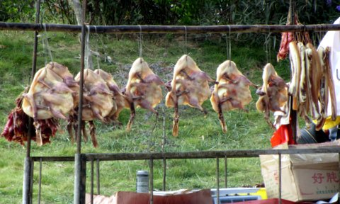 Pressed geese for sale