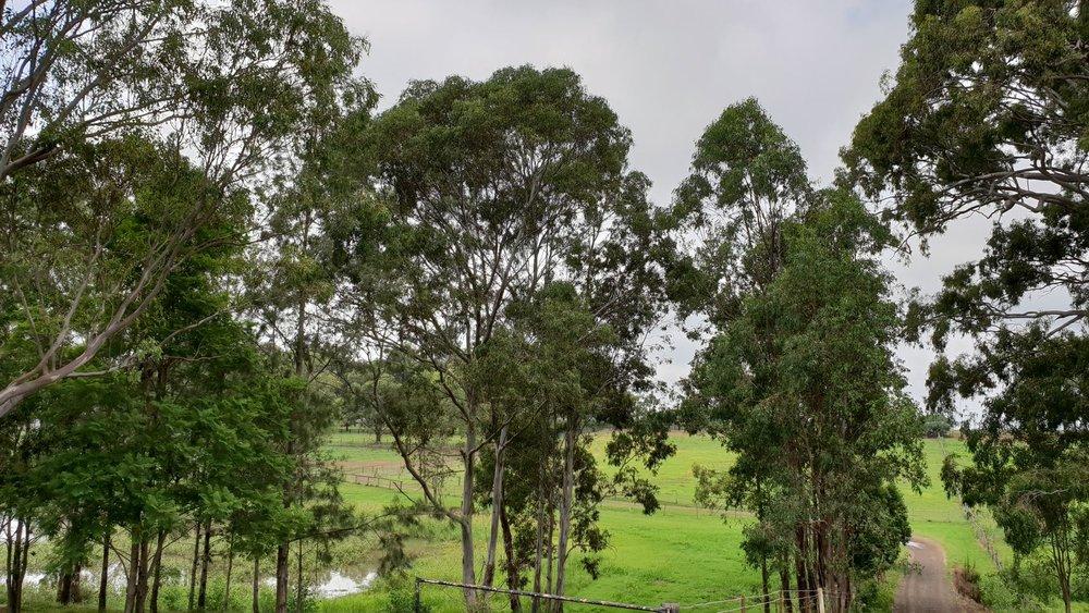 Fairview Park Stud Thoroughbred Agistment Sydney