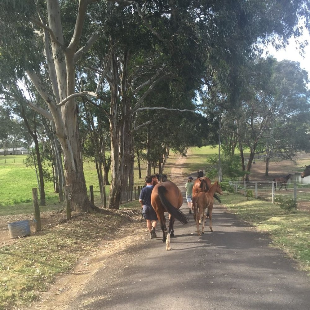 Fairview Park Stud Thoroughbred Agistment Sydney - Onsite Vet