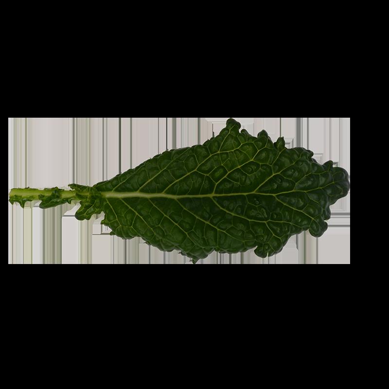 Cavole Nero kale