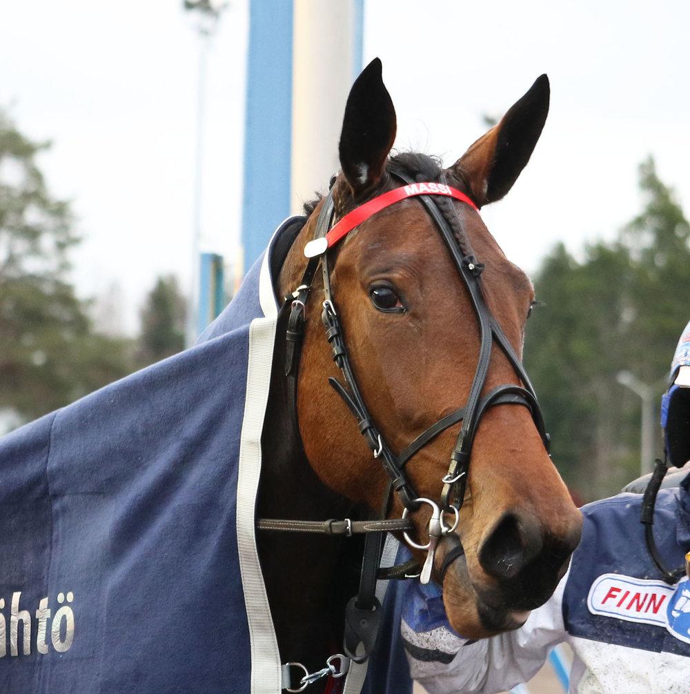 Raviliiga_HIFK_Mascate_Match_Pekka_Korpi_Kouvola_031118_kuva_Suomen_Hippos_Hanna_Laakso(1).JPG