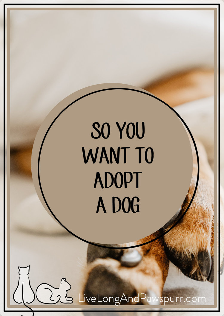 So You Want to Adopt A Dog class=