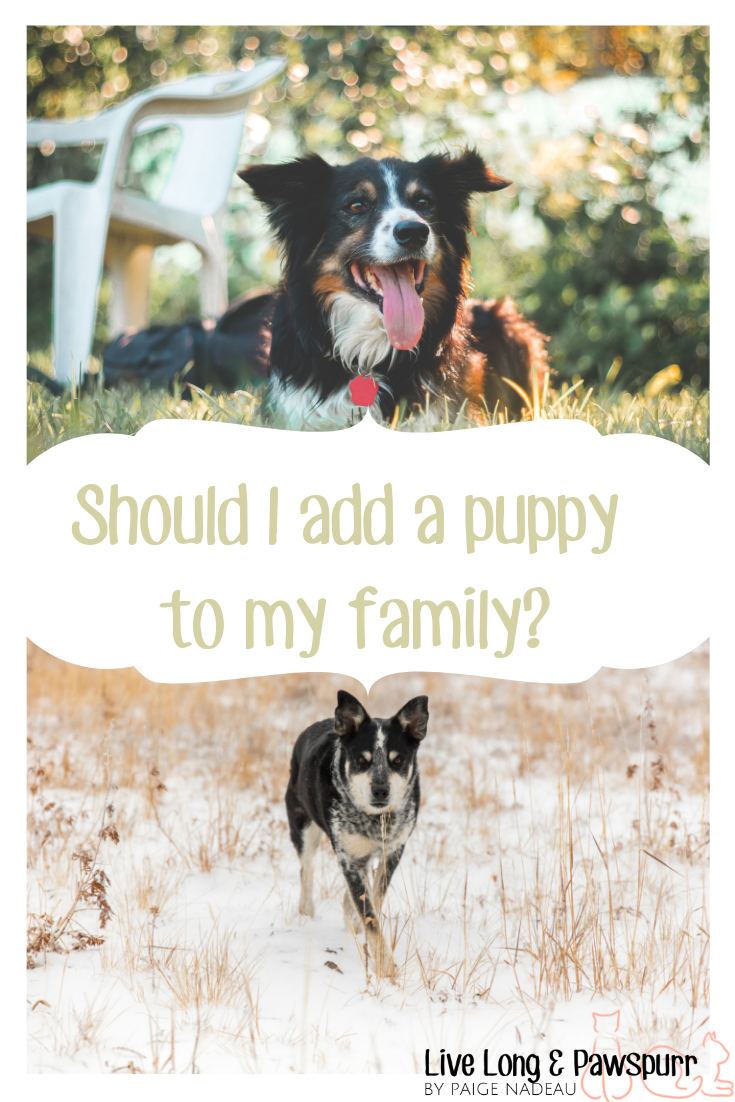 Should I add a puppy to my family?