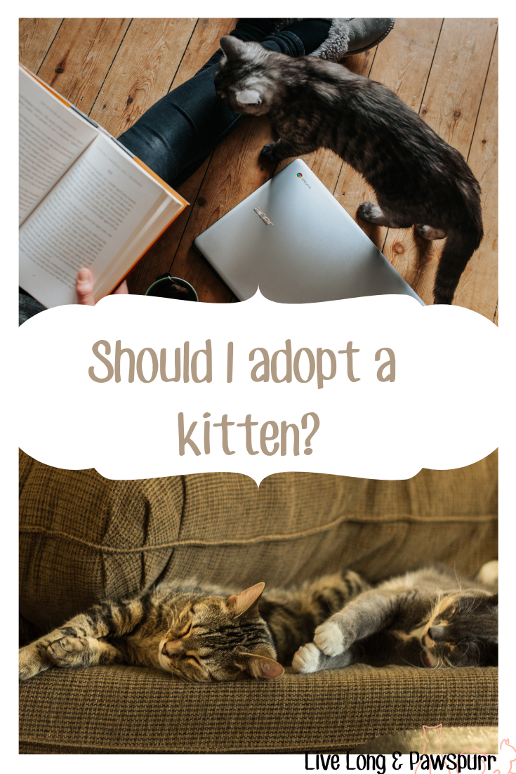 Should I adopt a kitten?
