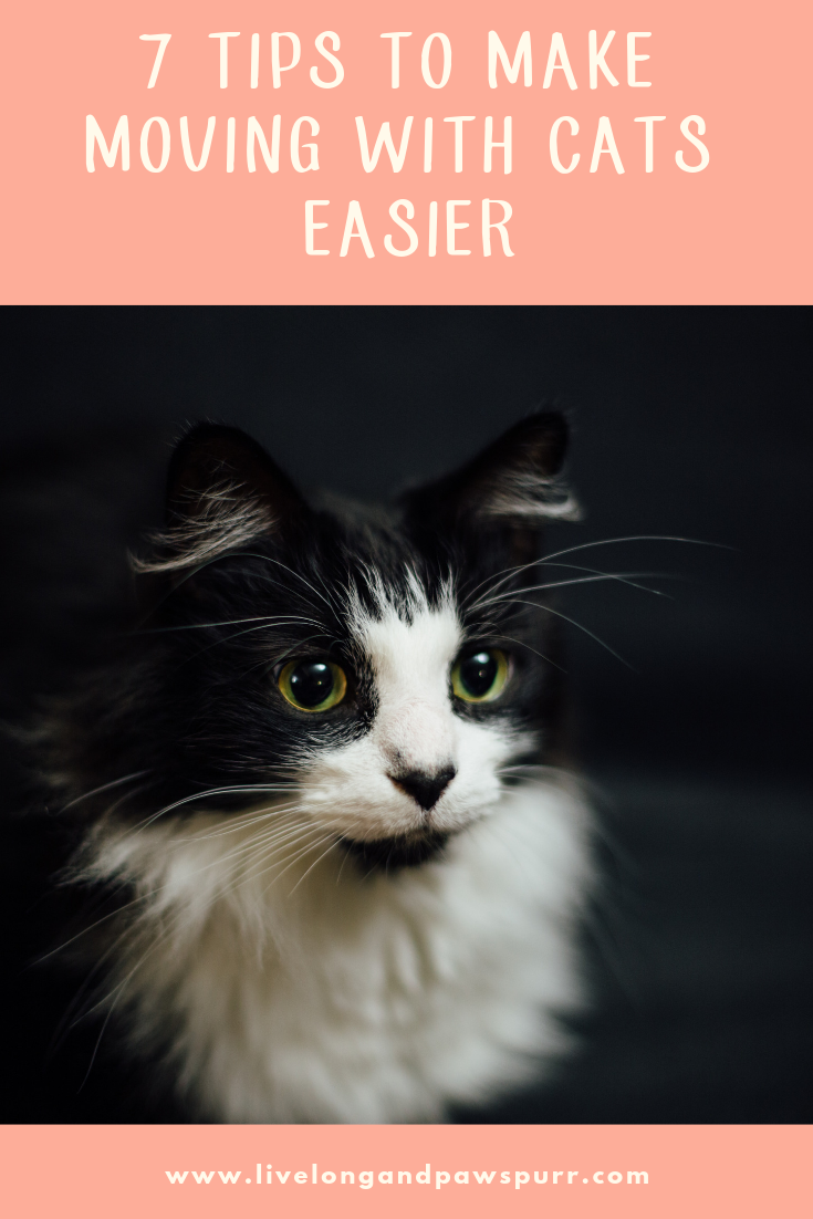 "7 Things to Make Moving Easier with Your Cat!"" class="