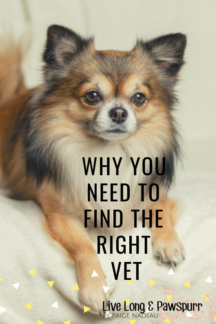 "Why You Need to Find the Right Vet"" class="
