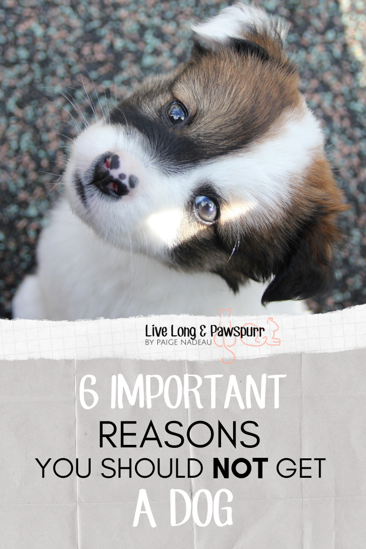 6 reasons not to get a dog