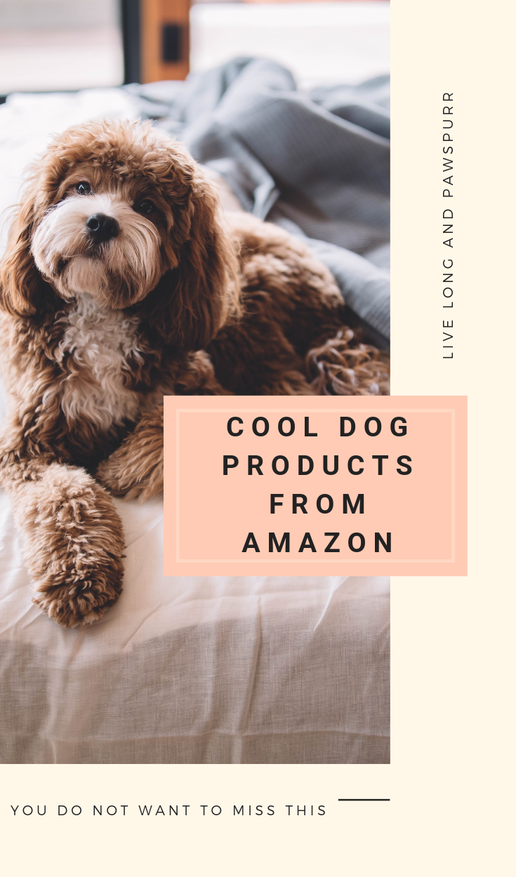 """Dog Products to Buy on Amazon"""" class="""