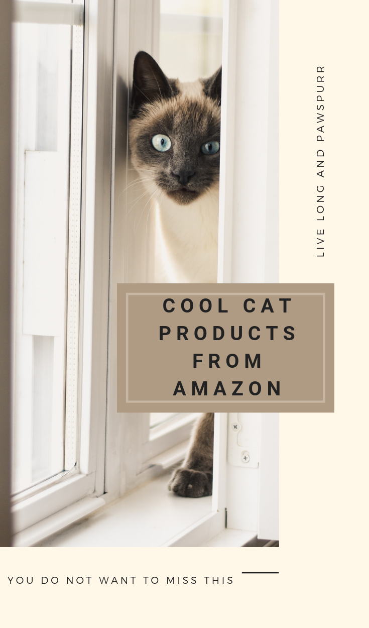 """Cat Products to Buy on Amazon"""" class="""