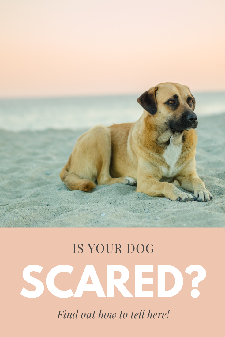 "Is Your Dog Scared?"" class="