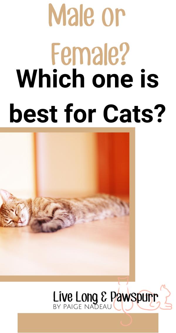 """Cat Genders"""" class="""