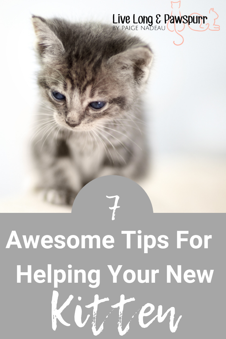 "Helpful Tips for Introducing a New Kitten"" class="