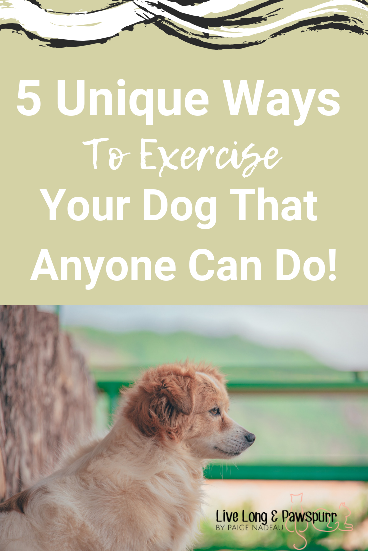 "Exercise Your Dog"" class="