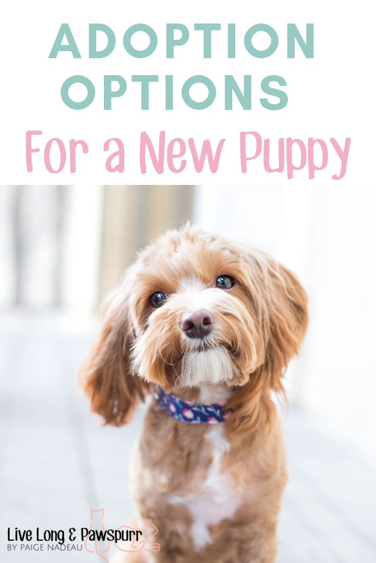 """Adoption Options for a New Puppy"""" class="""