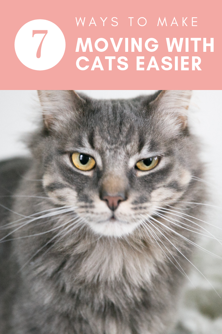 "7 Ways to Make Moving Easier with Cats"" class="