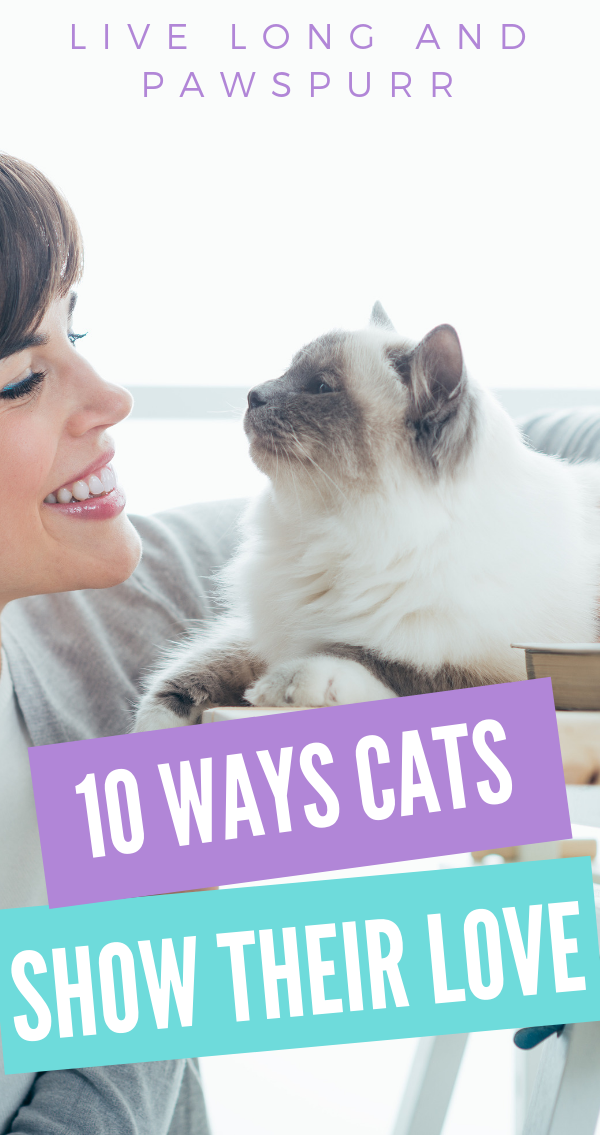 "10 Ways Cats Show Their Love"" class="