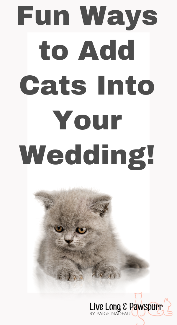 "Add Cats To Wedding"" class="