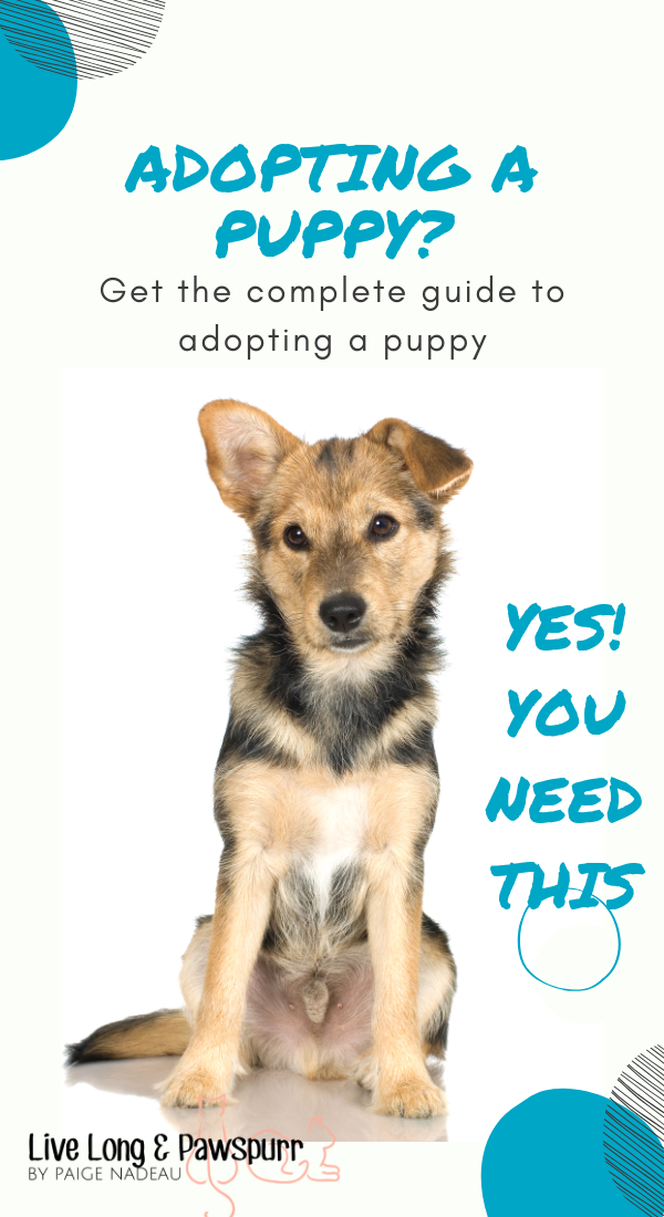"Complete Guide to Adopting a Puppy"" class="