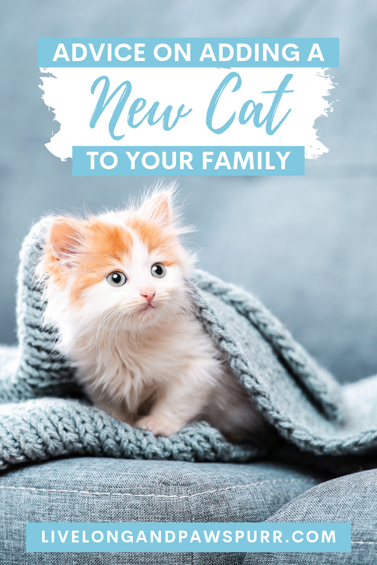 "Advice on adding a new kitten to your family"" class="