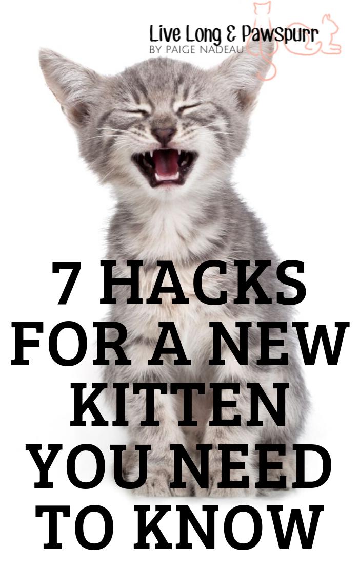 """Cat Hacks for a New Kitten"""" class="""