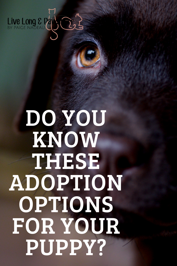 "Adoption Options for Puppies"" class="